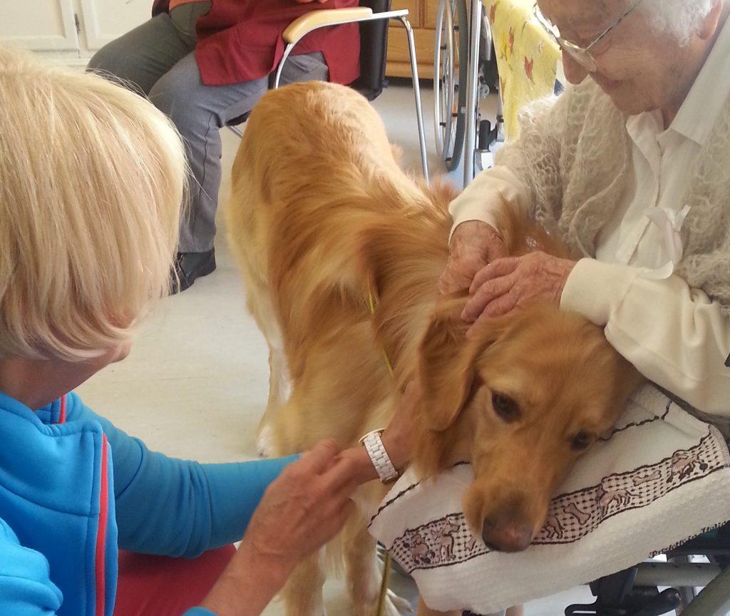 THT Änderung 1024x864 - Therapiehunde-Teamausbildung