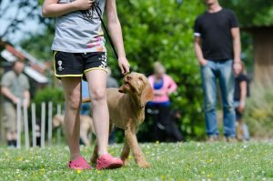 dog school 672718 1920 300x199 - Trainingsangebot
