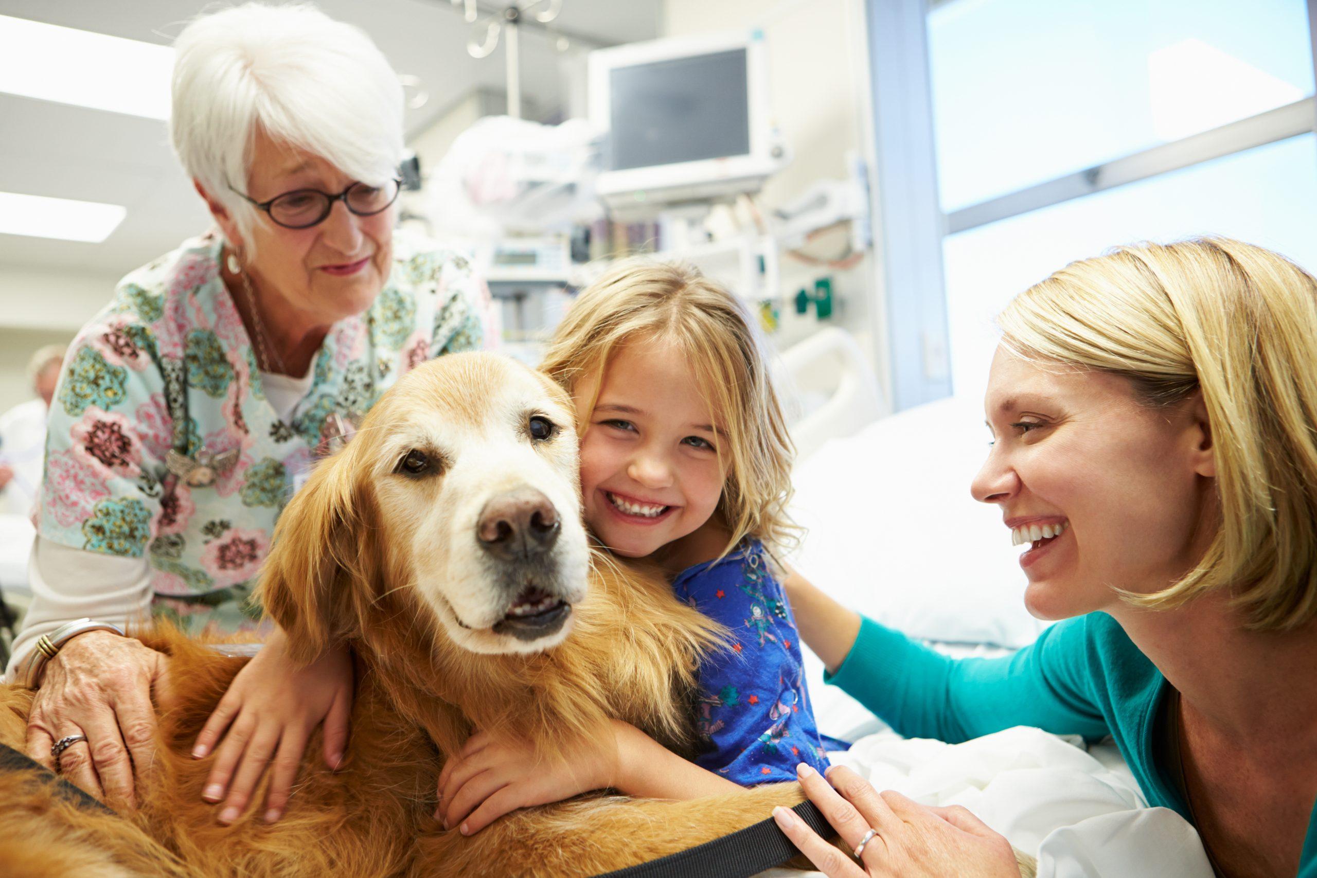 iStock 465134143 scaled - Therapiehunde-Teamausbildung